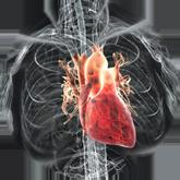 Профилактика сердечных заболеваний
