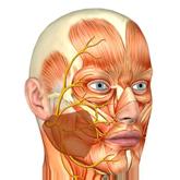 Невриты и их лечение