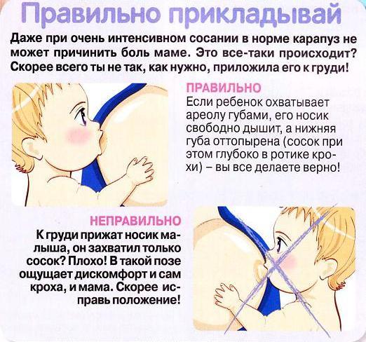 Как правильно прикладывать к груди