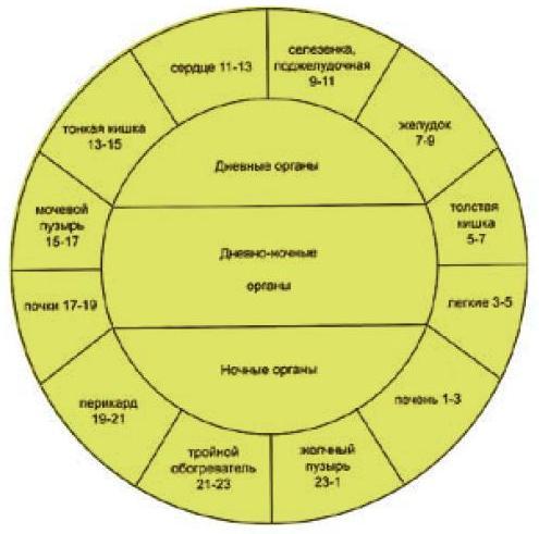 Схема движения энергии по каналам систем сы-цзин-сюэ